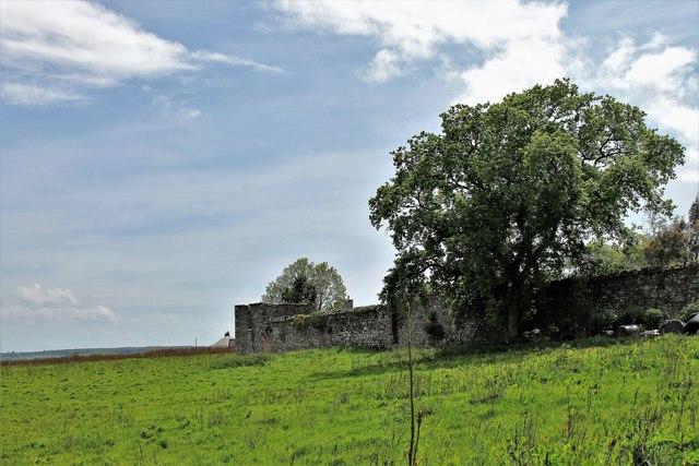 Wall and Tree