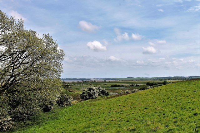 Grassland and Moss