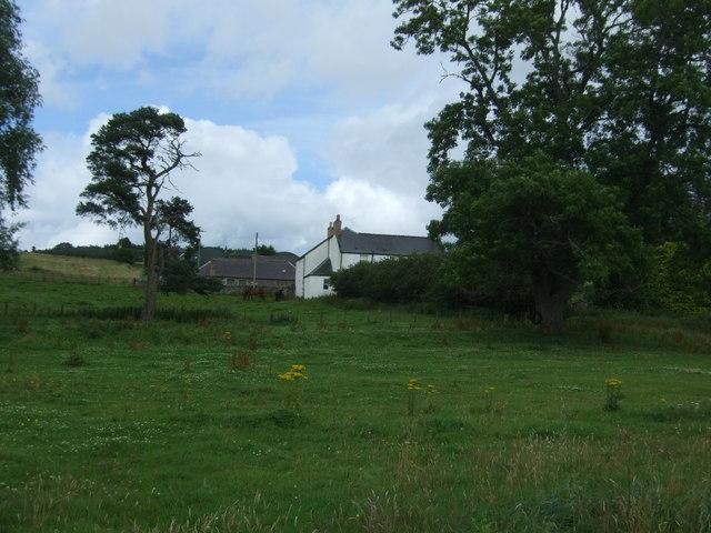 Grazing towards Fellcleugh Farm