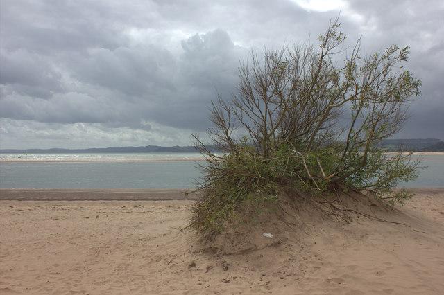 Exmouth beach. An outcrop of vegetation