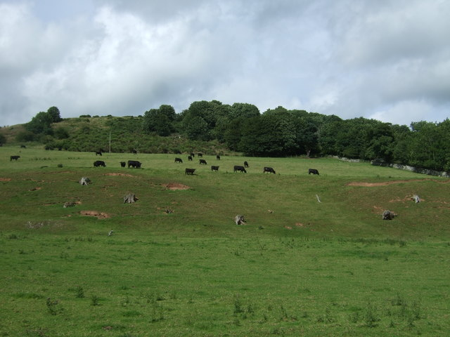 Hillside grazing, Burnhouses