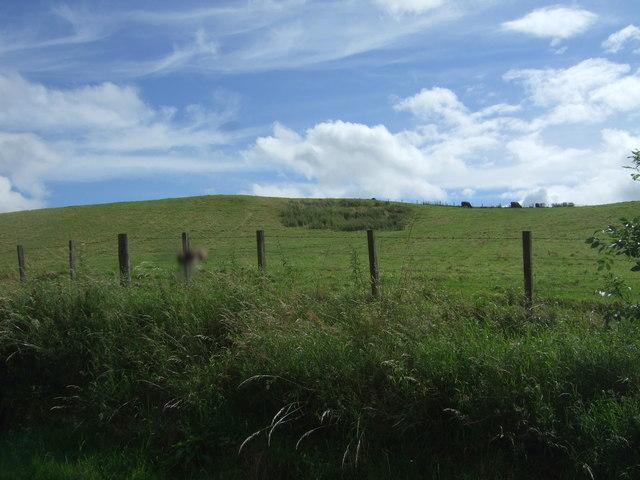 Hillside grazing, Millburn Bridge