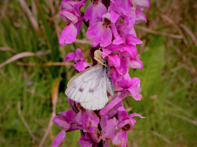 Orchid, butterfly and spider in Pond Wood