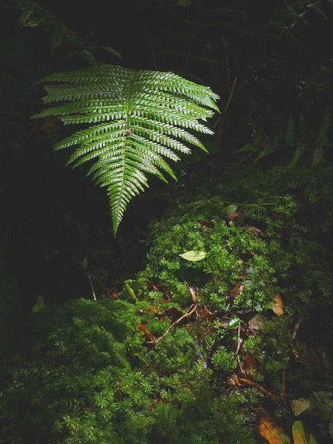 Fern and moss, Warton Crag
