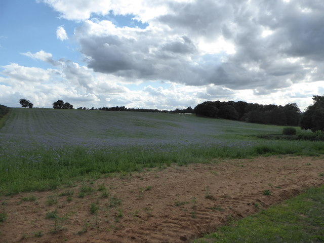 Field of linseed near Little Sutton Hoo