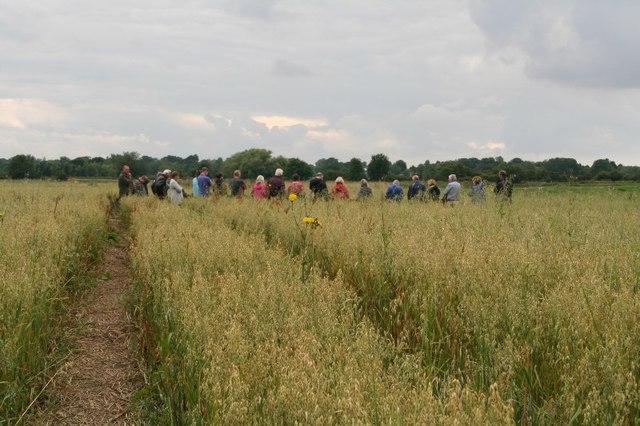 Open day in a Saxon oat field in Little Carlton (1)
