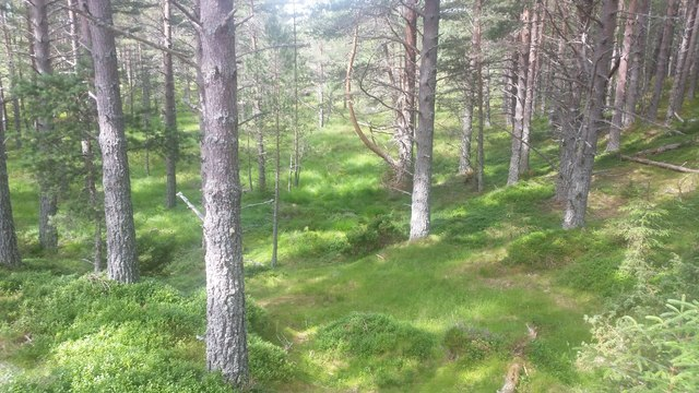 Woodland near Glenmore Lodge