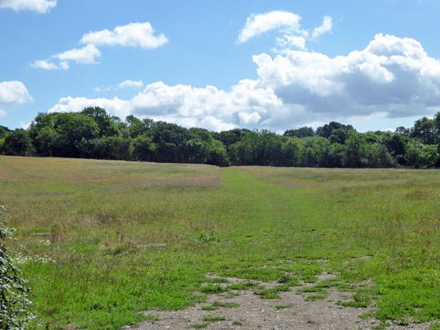 Ungrazed field