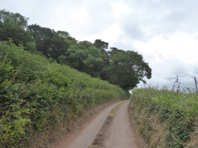 Woodland on Posbury Clump