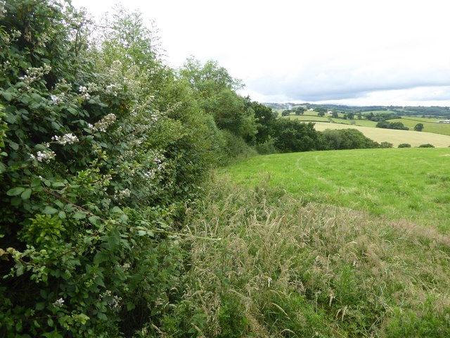 Hedge and field near Gunstone Mill