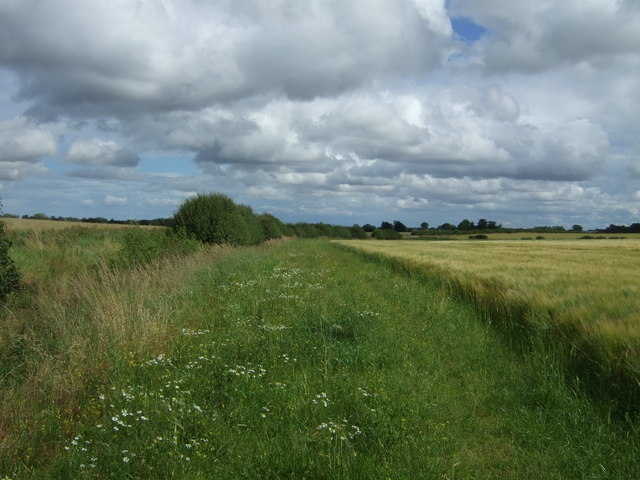 Field margin and drain near Cruxfield