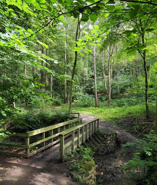 Woodland glade beyond footbridge