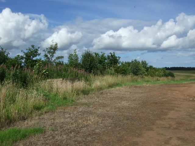 Young woodland near Lintlaw Burn