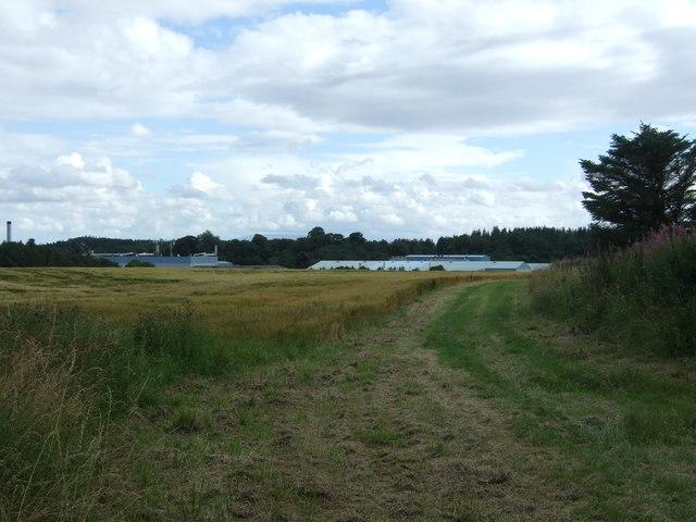 Crop field near Whiteadder Water