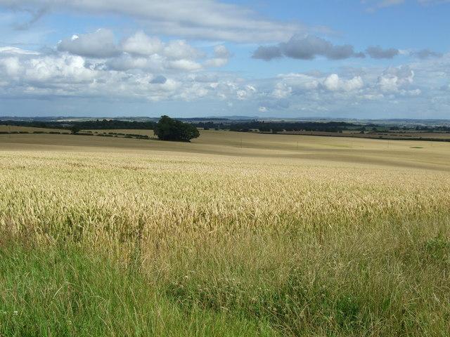 Cereal crop, Edingtonhill