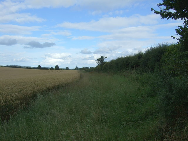 Field margin and hedgerow beside the A6105