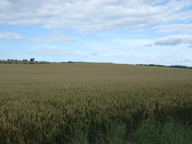 Cereal crop off the A6105