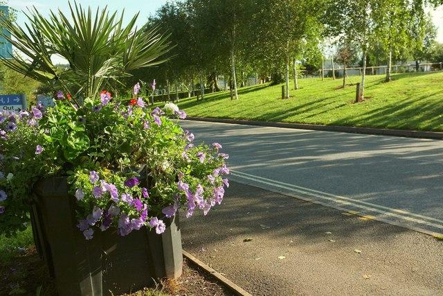 Petunias, Torbay Hospital grounds