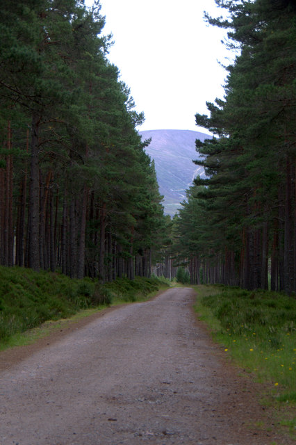 Track in the Queen's Forest, Glen More