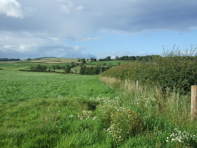 Field and hedgerow, Baldersbury Hill
