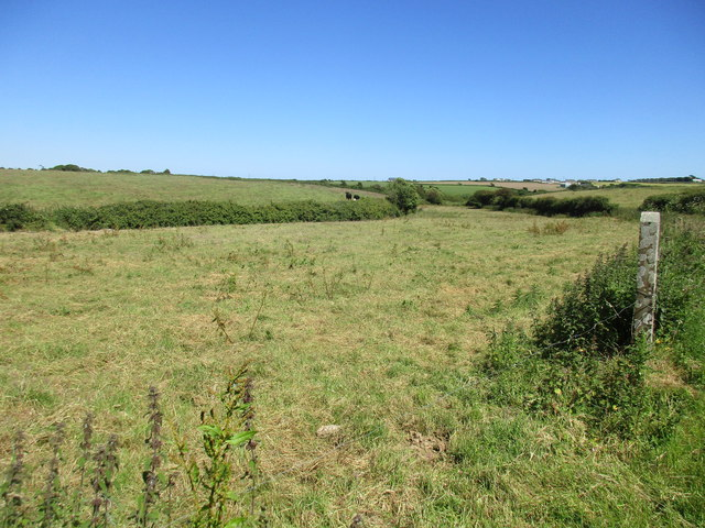 Rough grassland near Churchtown South