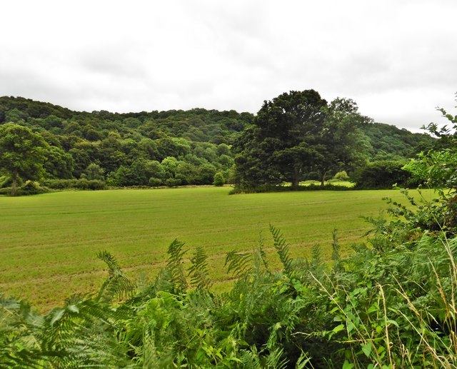 The Exe Valley, south of Tiverton