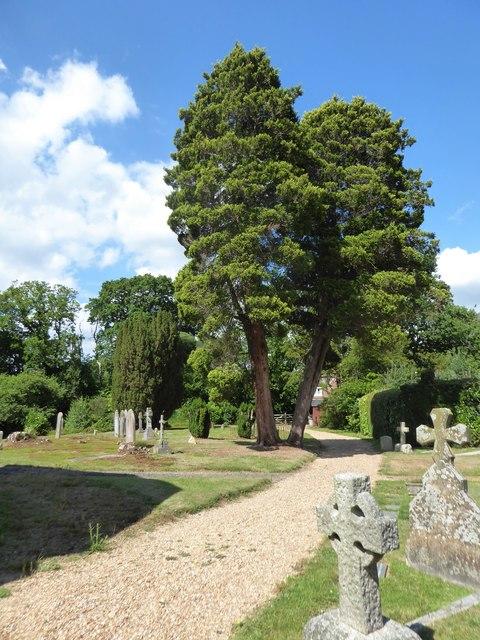 St Philip, Burwash Weald: churchyard (b)