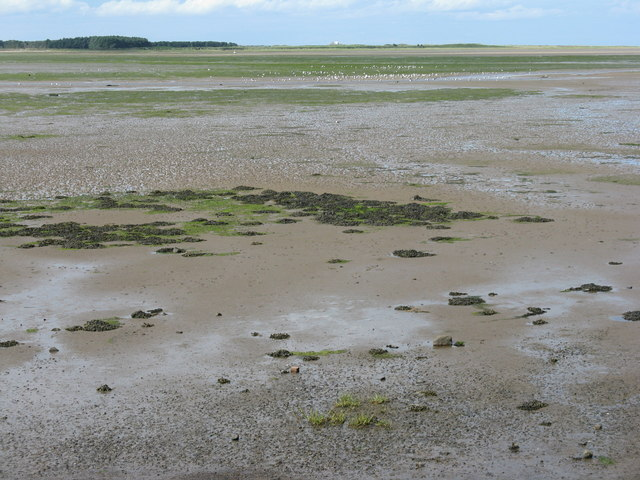 Chesterhill Slakes at Budle Bay