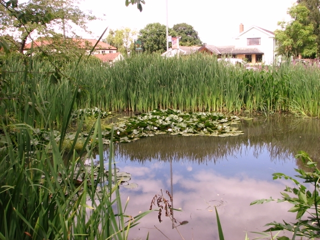 Pond in the Memorial Garden, Poringland