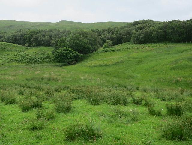 Damp grazing, Glen Strae