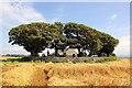 SH4560 : St Baglan's Church, Llanfaglan by Jeff Buck