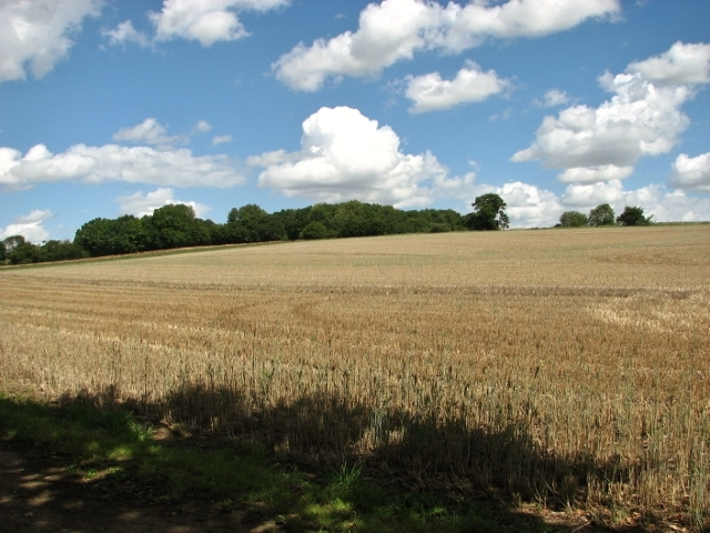 Harvested field beside Wash Lane