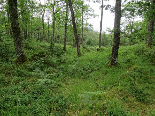Woodland, Strone Hill