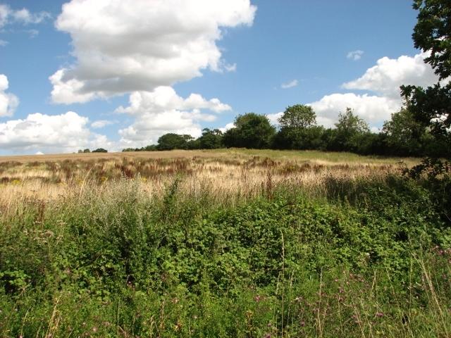 Fields beside Wash Lane