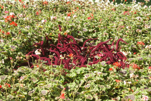 View of a flowerbed in Greenwich Park #3