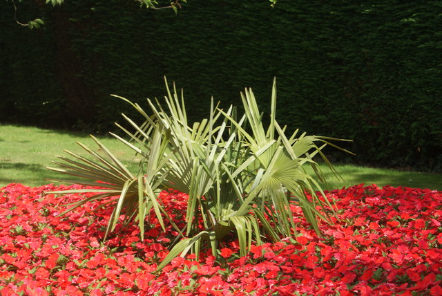 View of a flowerbed in Greenwich Park #4