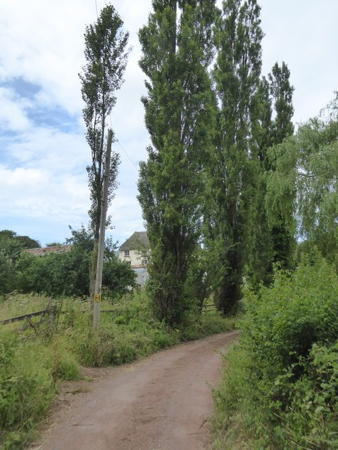 A line of trees at Stairhill Farm
