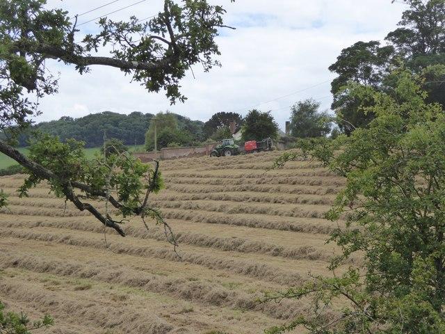 Turning the hay at Moor Farm