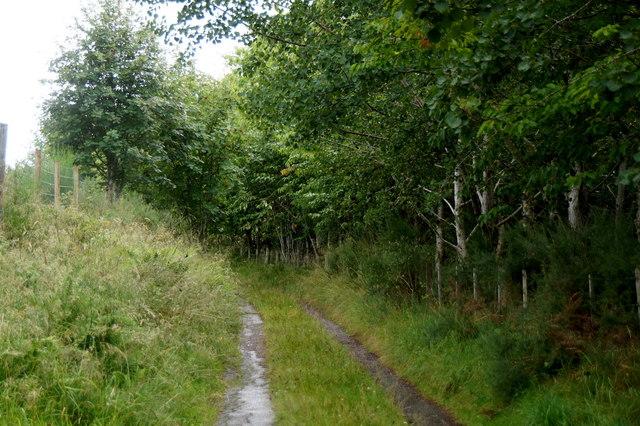 Track to Ardochy, near Teanassie