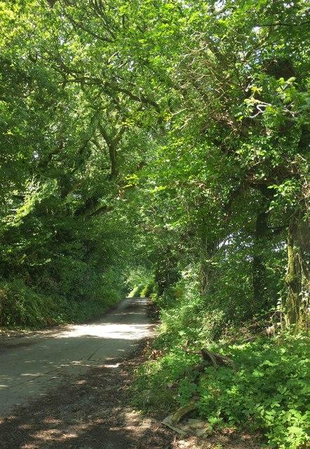 Lane at High Marks Barn