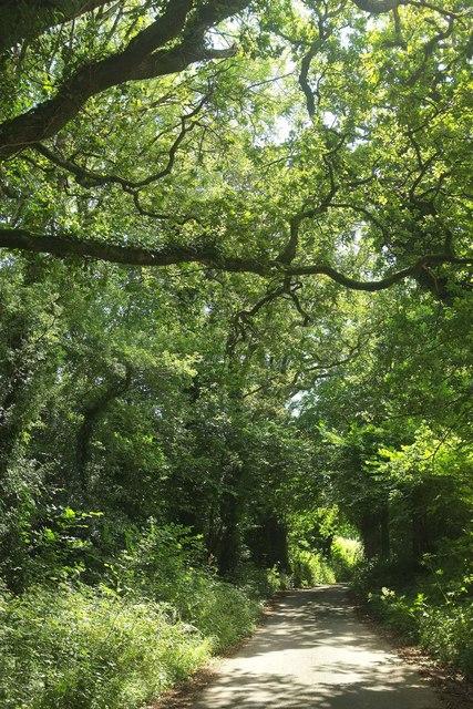 Lane past Upper Common