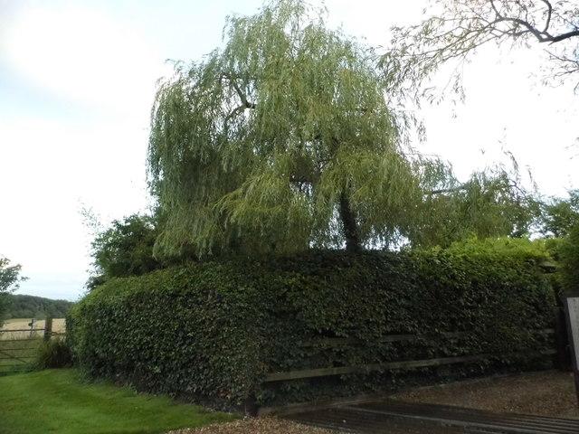 Garden in Wickham Heath