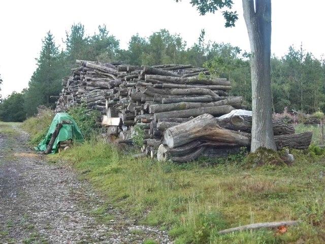 Woodpile on Long Plantation, Wickham Heath