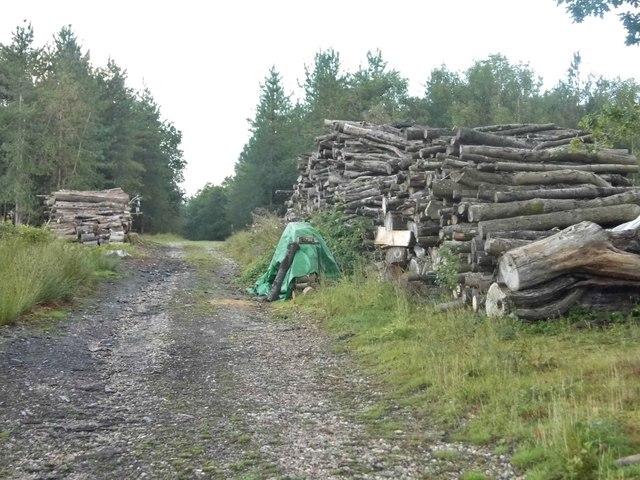 Woodpiles on Long Plantation, Wickham Heath