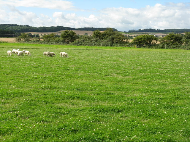 Sheep pasture near Smeafield