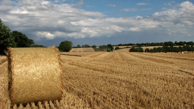 Harvesting the wheat in Surlingham