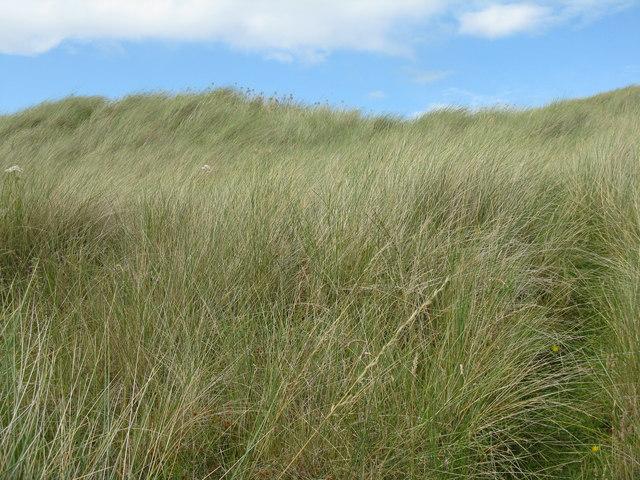 Lindisfarne sand dune