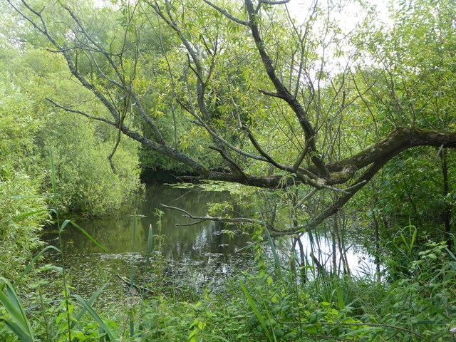 Stodmarsh National Nature Reserve