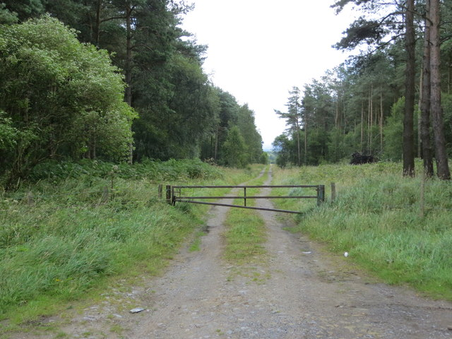 Forest Track to High Moor
