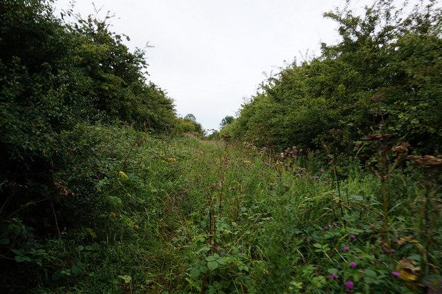 Common Lane towards Wawne